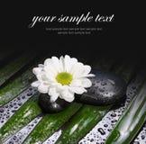 Blume mit Steinen Lizenzfreie Stockfotos