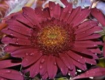 Blume mit Tau Stockfotos