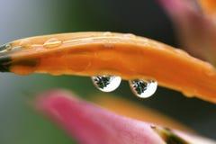 Blume mit Tautropfen Stockbild