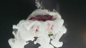 Blume mit Tintenzusammenfassung auf schwarzem Hintergrund stock footage