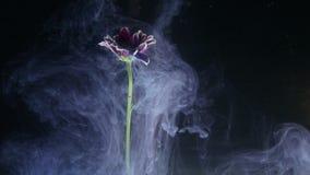 Blume mit Tintenzusammenfassung auf schwarzem Hintergrund stock video footage