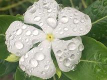 Blume mit Tröpfchen stockfoto
