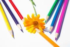 Blume mit vielen hellen Bleistiften Stockfotos