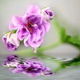 Blume mit Wasserreflexion Stockbild