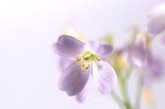 Blume mit weißem Hintergrund Stockbilder