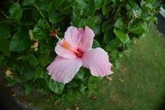 Blume nach Regen stockbilder