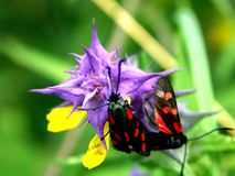 Blume nad ein Insekt Stockfotografie