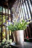 Blume neben dem Fenster Stockfotografie