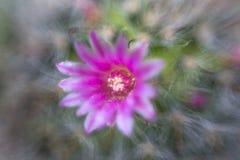 Blume ohne Fokus Stockbild
