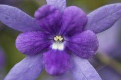 Blume ohne Fokus Stockfoto