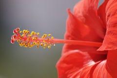 Blume ohne Typen Lizenzfreies Stockfoto