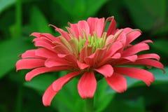 Blume am Park Stockbilder