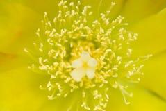 Blume, Pistil und Staubgefäß Lizenzfreie Stockfotografie