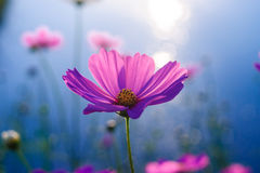 Blume rimlight lizenzfreies stockfoto