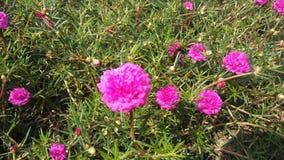 Blume s Stockfoto