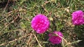 Blume s Lizenzfreie Stockfotografie