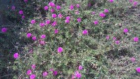 Blume s Lizenzfreie Stockfotos