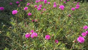 Blume s Lizenzfreies Stockbild