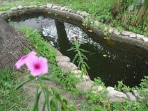Blume ` s Stockbild