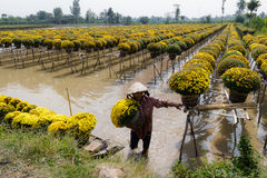 Blume Sadec, Vietnam stockbilder