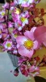 Blume Sakura Stockfotografie