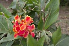 Blume in San Pedro, Buenos Aires, Argentinien Stockfotos