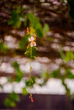 Blume schön Lizenzfreies Stockfoto