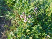 Blume Schöne Naturlandschaftsim frühjahr Zeit Russland Stockfotografie