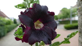 Blume in seiner reinsten Form lizenzfreie stockfotografie