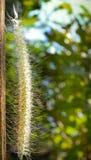 Blume setzte an Bauholz in Naturhintergrund ein (Nahaufnahmeblume) Stockbilder