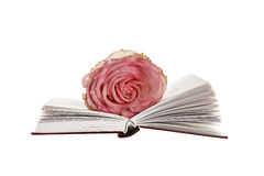 Blume stieg auf offenes Buch Stockfotos
