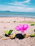 Blume am Strand lizenzfreie stockfotografie