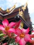 Blume in Thailand Lizenzfreies Stockfoto