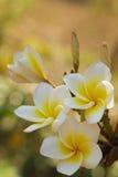 Blume in Thailand Stockbild