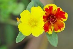 Blume in Thailand Lizenzfreie Stockfotografie