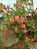 Blume thoren Lizenzfreie Stockfotos