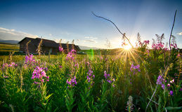 Blume u. Sonnenuntergang Stockfotos
