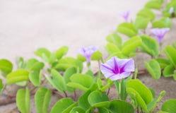 Blume und Anlage auf dem Strand Lizenzfreie Stockfotos