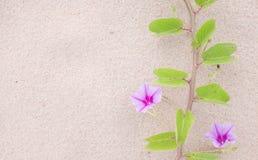 Blume und Anlage auf dem Strand Stockfotografie