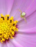 Blume und araneid Lizenzfreie Stockfotografie