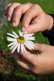 Blume und Biene Lizenzfreie Stockfotos