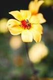 Blume und Biene Stockfotos
