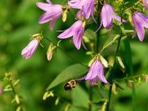 Blume und Biene Stockfotografie