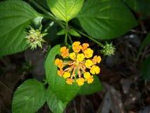Blume und Blätter Stockfotografie