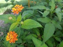 Blume und Blätter Stockbilder
