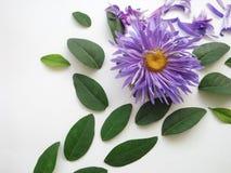 Blume und Blätter auf einem weißen Hintergrund stockbilder