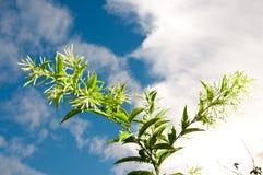 Blume und blauer Himmel lizenzfreies stockfoto