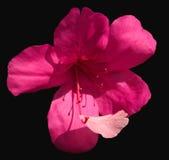 Blume und Blumenblatt lizenzfreie stockfotografie