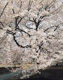 Blume und Brücke Lizenzfreies Stockbild
