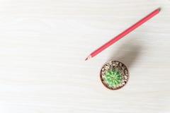 Blume und bunte Bleistifte Ansicht von oben genanntem mit Kopienraum Lizenzfreies Stockfoto